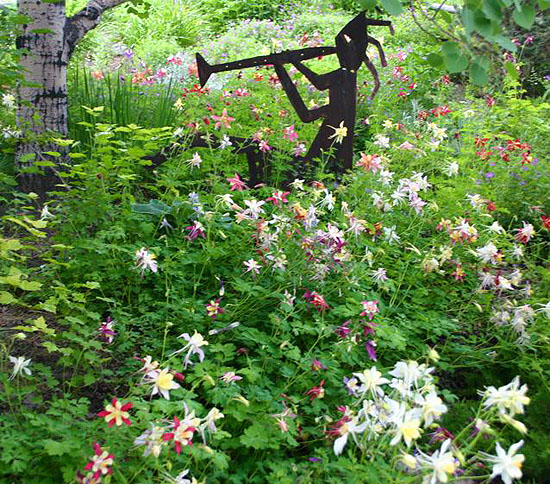 Aspen and Naturalized Columbine