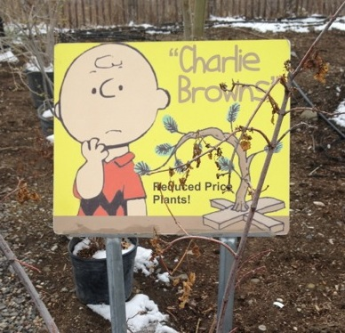 Charlie Brown Sign